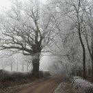 Frosty lane